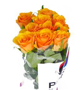 Rosa hol tycoon 60 - RGRTYC