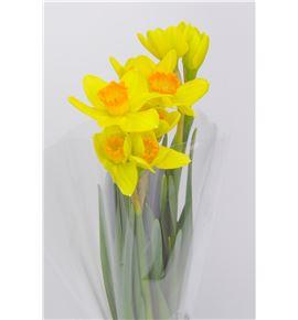 Narciso pinza 46 - NARPIN
