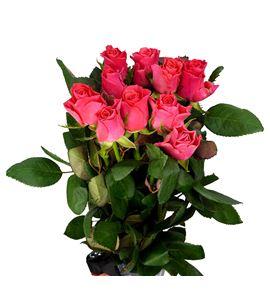 Rosa hol pink tacazzi 50 - RGRPINTAC