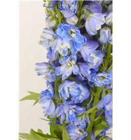 Delph triton dark blue 70 - DELTRIDARBLU