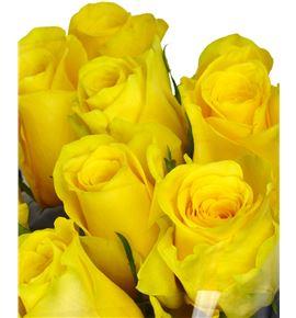 Rosa hol yelloween 70 - RGRYEL