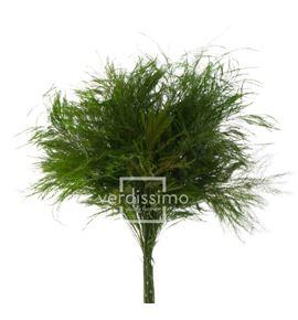 Treefer preservado tik/0104 - TIK0104-2-TIKI
