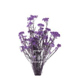 Flor de arroz preservado hdi/0820 - HDI0820-02-HELYCHRISIUM-DIOSMI