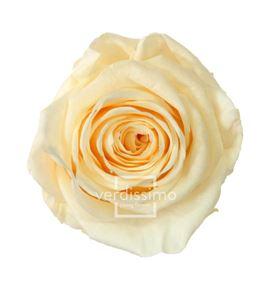 Rosa preservada standart 6 unid rst/202g - RST202G-03-ROSA-STANDARD