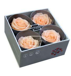 Rosa preservada premium 4 unid rsg/2550 - RSG2550-03-ROSA-PREMIUM
