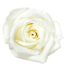 Rosa preservada mini 12 unid rsm/1001 - RSM1001-03-ROSA-MINI