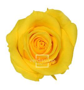 Rosa preservada mini 12 unid rsm/1341 - RSM1341-03-ROSA-MINI