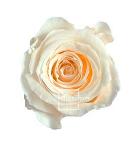 Rosa preservada princesa 16 unid rsp/4021 - RSP4021-03-ROSA-PRINCESS