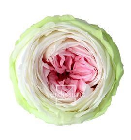 Rosa preservada jardin 6 unid rgat/2104 - RGAT2104-03-ROSA-JARDIN