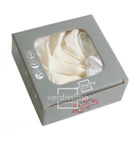 Mini cala preservada crema mcl/5000 - MCL5000-03-MINI-CALLA