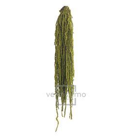Amaranthus preservado almendra ama/4114 - AMA4114-2-AMARANTHUS