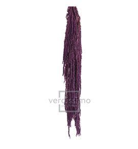 Amaranthus preservado purpura ama/4824 - AMA4824-2-AMARANTHUS