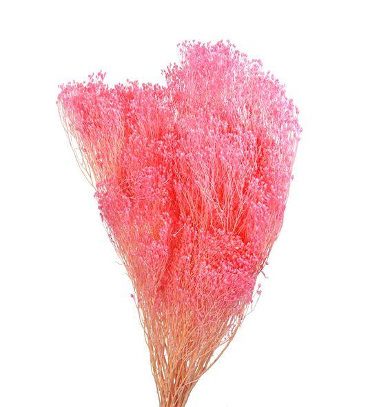 Broom bloom preservado rosa - BROBLOROS