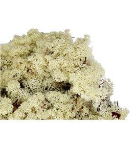 Musgo polar preservado 1kg moi/1000 - MOI5000