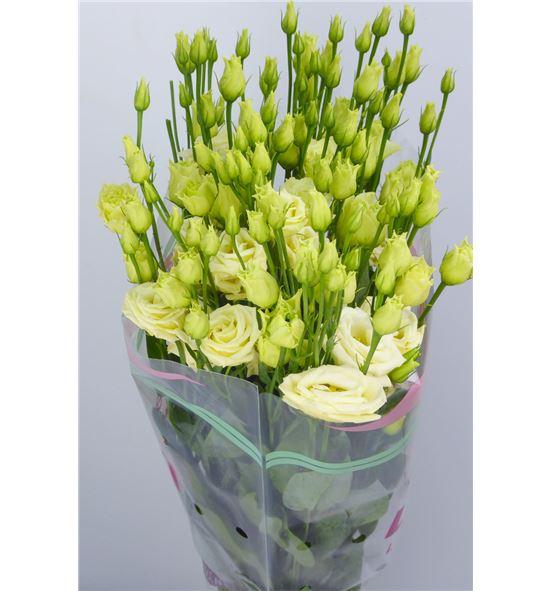 Lisianthus rosita yellow 65 - LISROSYEL