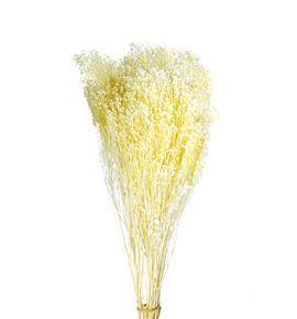 Broom bloom preservado blanco - BROBLOBLA
