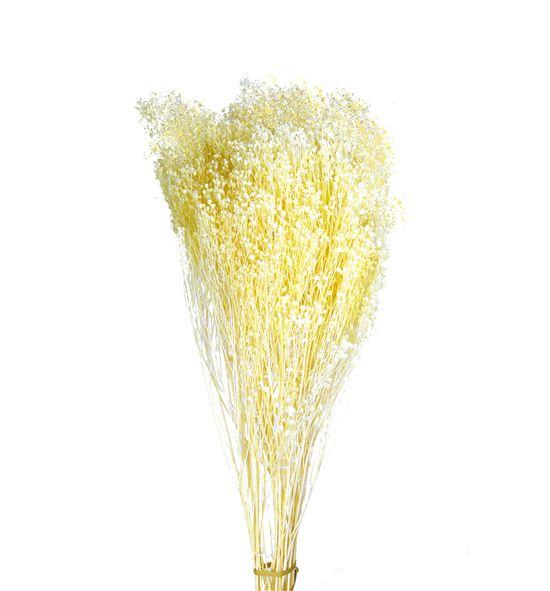 Broom bloom preservado blanco - BROBLOBLA