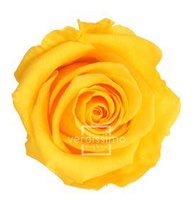 Rosa preservada standart 6 unid rst/235g - RST235G-03-ROSA-STANDARD