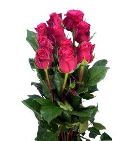 Rosa hol cherry 70 - RGRCHE