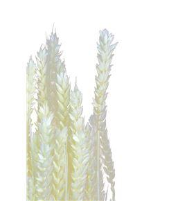 Trigo seco blanco - TRISECBLA
