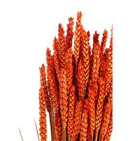 Trigo seco naranja - TRISECNAR