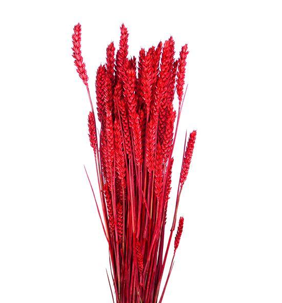 Trigo seco rojo - TRISECROJ