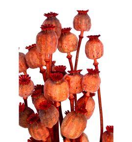 Papaver seco naranja - PAPSECNAR