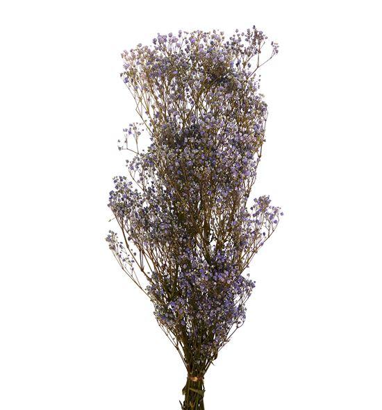 Gypsophila preservado lila - GYPPRELIL