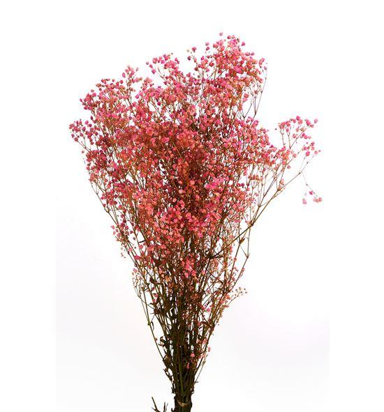 Gypsophila preservado rosa - GYPPREROS