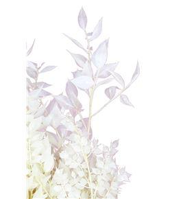 Ruscus fino preservado blanco - RUSPREBLA