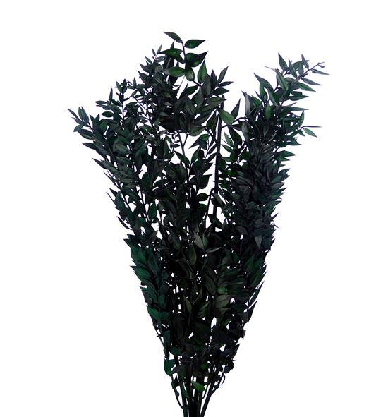 Ruscus fino preservado verde - RUSPREVER
