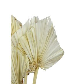 Palmito seco blanco - PALSECBLA