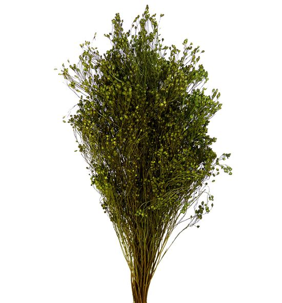 Broom bloom seco verde - BROSECVER