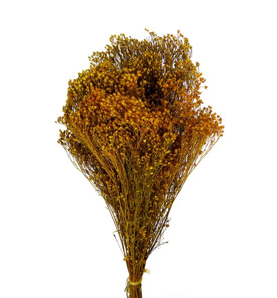 Broom bloom seco amarillo - BROSECAMA