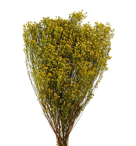 Broom bloom seco natural - BROSECNAT