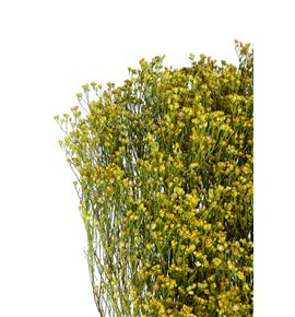 Broom bloom seco natural - BROSECNAT