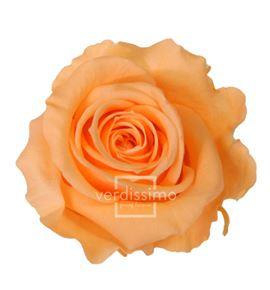 Rosa preservada standart 6 unid rst/255g - RST255G-03-ROSA-STANDARD
