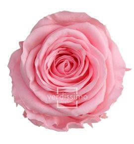 Rosa amorosa preservada mini prz/2420 - PRZ2420-05-ROSA-TALLO-MINI