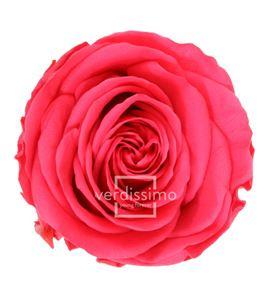 Rosa amorosa preservada mini prz/2490 - PRZ2490-05-ROSA-TALLO-MINI