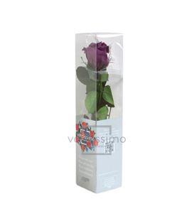 Rosa amorosa preservada mini prz/2840 - PRZ2840-05-ROSA-TALLO-MINI
