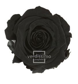 Rosa amorosa preservada mini prz/2990 - PRZ2990-05-ROSA-TALLO-MINI