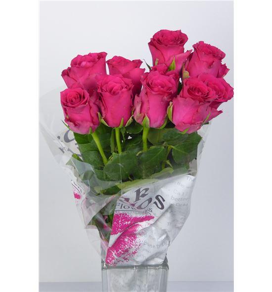 Rosa hol. pink rhodos 60 - RGRPINRHO