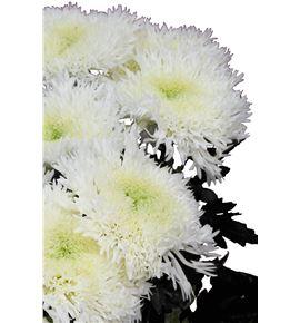 Cr etrusko white 70 - CRGETRWHI