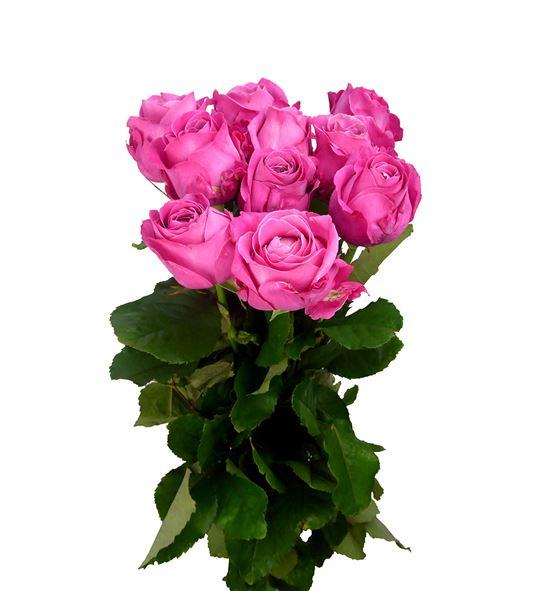 Rosa hol all 4 love+ 70 - RGRALL4LOV