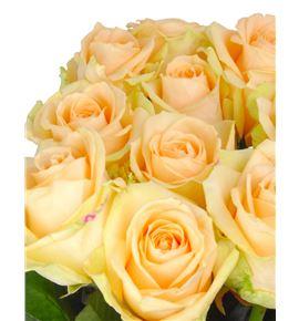 Rosa hol. avalanche peach 50 - RGRPEAAVA