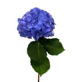 Hydr elbtal azul 50 - HYDELBAZU