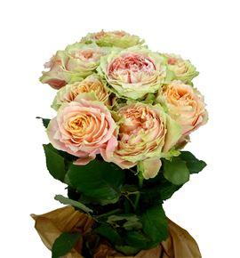 Rosa hol victorian kiss 60 - RGRVICKIS