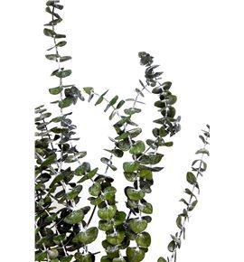 Eucaliptus preservado baby - EUCPREBAB