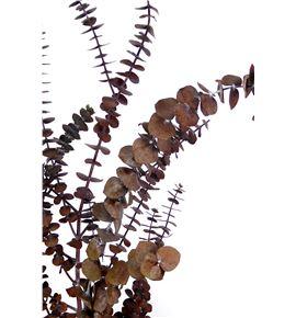 Eucaliptus preservado baby rojo - EUCPREBABROJ