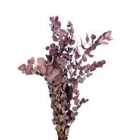 Eucaliptus preservado cinera rojo - EUCPRECINROJ
